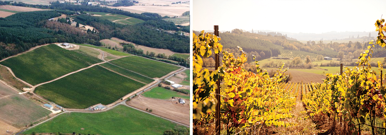 EW_Vineyard_Illahe